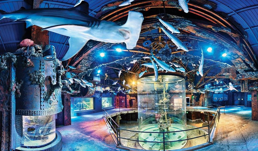 Wonders of Wildlife Museum Opens